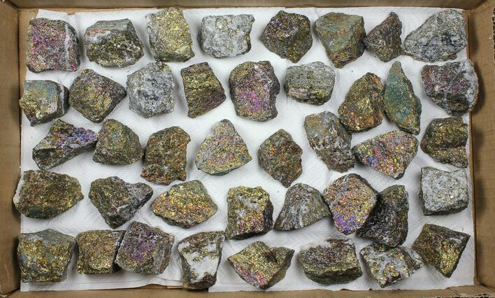 Wholesale Flat: 40 Pieces Peacock Ore (Chalcopyrite) - Morocco