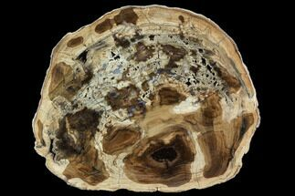 "Buy 8.3"" Petrified Wood (Cherry) Round - McDermitt, Oregon - #104917"