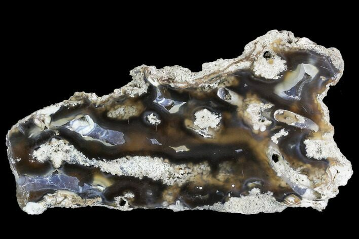 "5.6"" Agatized Fossil Coral Geode - Florida"