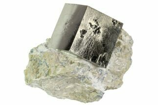 Pyrite - Fossils For Sale - #105399