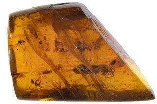 Cretaceous Fossil Insect Cluster in Amber - Myanmar For Sale, #105698