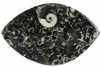 "5.5"" Wide, Fossil Goniatite Dish - Morocco For Sale, #106700"