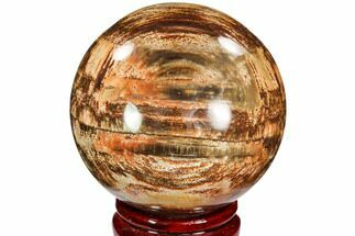 "3.4"" Colorful Petrified Wood Sphere - Madagascar For Sale, #106985"