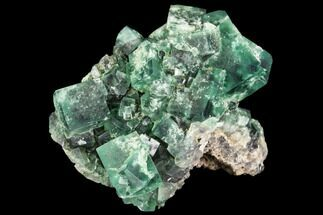 "Buy 2.1"" Fluorite Crystal Cluster -  Rogerley Mine - #106120"