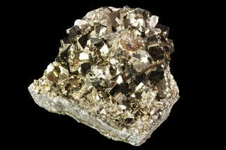 Pyrite & Quartz - Fossils For Sale - #107418