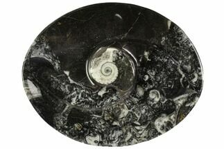 "Buy 4.7"" Oval Shaped Fossil Goniatite Dish - Morocco - #108007"