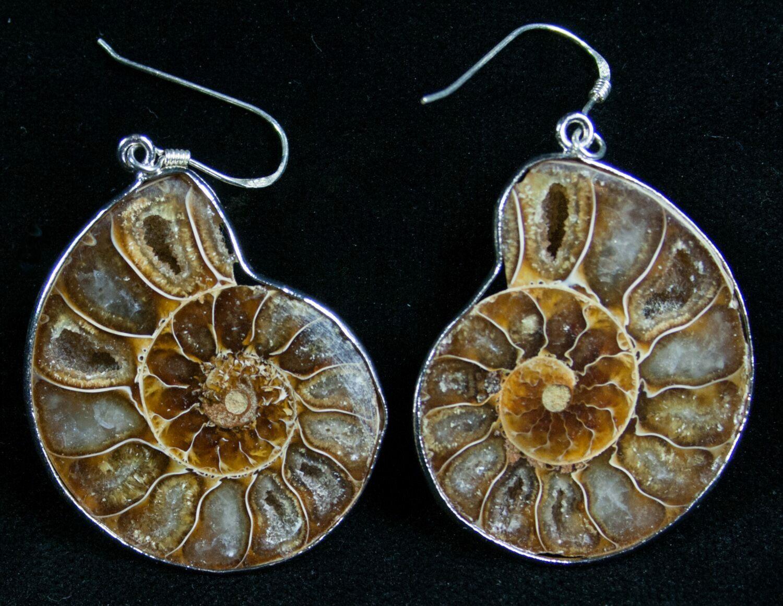 9b4214d00 Stylish Ammonite Earrings - Sterling Silver For Sale (#7672) - FossilEra.com