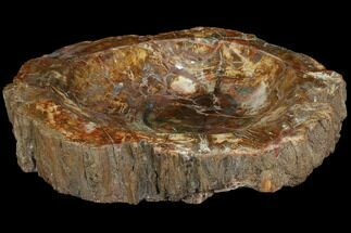 "10.7"" Colorful Polished Petrified Wood Dish - Madagascar For Sale, #108197"