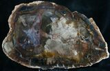 "Quality Araucaria Petrified Wood Slab - 8.6"" - #7630-1"