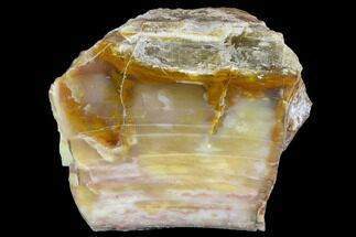 "Buy 3.7"" Petrified Wood (Araucioxylon) - Circle Cliffs, Utah - #110119"
