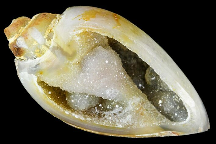 "1.55"" Chalcedony Replaced Gastropod With Druzy Quartz - India"