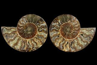 "Buy 4.2"" Agatized Ammonite Fossil (Pair) - Madagascar - #111475"