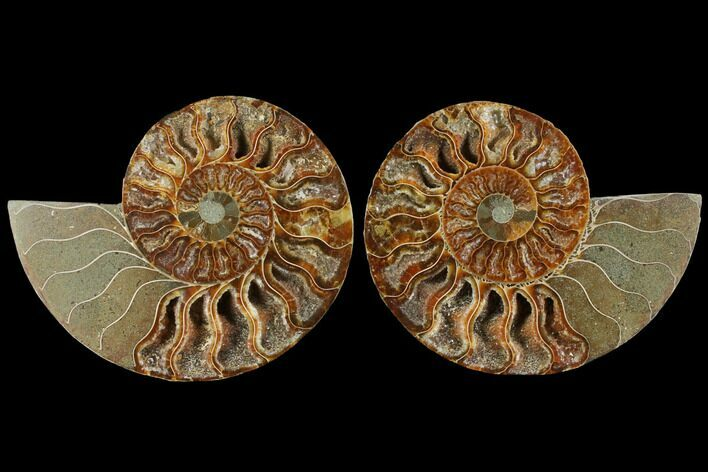 "4.6"" Agatized Ammonite Fossil (Pair) - Madagascar"