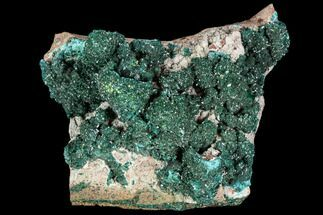 "Buy 3.4"" Dark Green Dioptase Crystal Cluster - Congo - #111562"