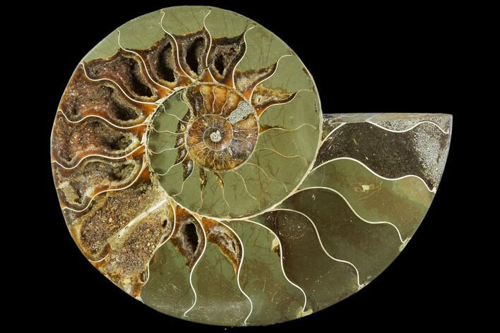 "6.1"" Agatized Ammonite Fossil (Half) - Crystal Chambers"