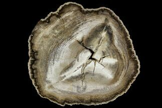 Mahogany - Fossils For Sale - #112038