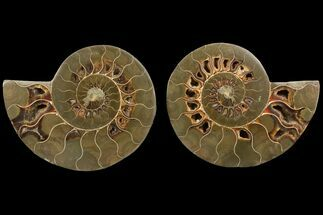 "Bargain, 5.0"" Agatized Ammonite Fossil (Pair) - Madagascar For Sale, #111527"