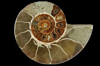 "Bargain, 3.7"" Cut Ammonite Fossil (Half) - Madagascar For Sale, #111506"