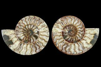 "Buy 7.7"" Agatized Ammonite Fossil (Pair) - Madagascar - #113059"