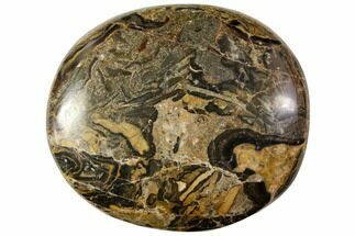 "2.1"" Polished Stromatolite (Greysonia) Pebble - Bolivia For Sale, #113516"