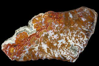 Quartz var. Agate  - Fossils For Sale - #114843