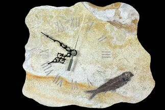 "11.0"" Wide Fossil Fish (Knightia) Clock - Wyoming For Sale, #114326"