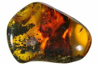 "1.4""  Polished Chiapas Amber (7 grams) - Mexico For Sale, #114779"