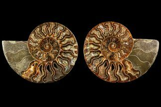 "4.15"" Sliced Ammonite Fossil (Pair) - Agatized For Sale, #116786"