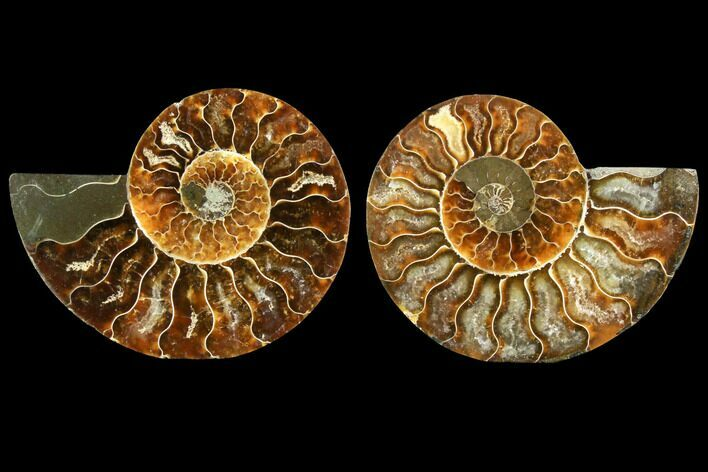 "3.4"" Sliced Ammonite Fossil (Pair) - Agatized"