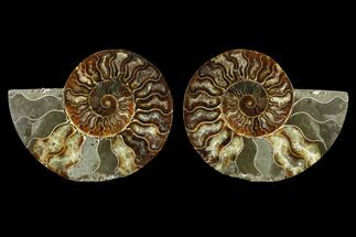 "Buy 5.15"" Sliced Ammonite Fossil (Pair) - Agatized - #115324"
