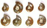 Wholesale Lot: Polished Whole Ammonite Fossils - 20 Pieces - #116580-2