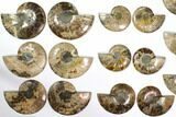 "Wholesale Lot: 4.1 to 5.8"" Cut/Polished Ammonite Fossil - 11 Pairs - #117037-1"