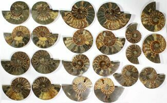 "Wholesale Lot: 3.9 to 6.4"" Cut/Polished Ammonite Fossil - 11 Pairs For Sale, #117038"