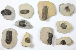 Various - Fossils For Sale - #119934
