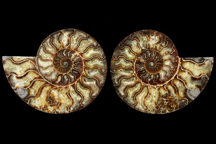 "7.3"" Agatized Ammonite Fossil (Pair) - Madagascar"