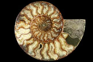 "Buy 7.55"" Cut Ammonite Fossil (Half) - Agatized - #121492"