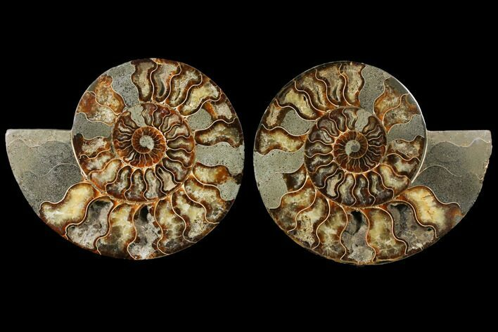 "8.8"" Agatized Ammonite Fossil (Pair) - Madagascar"