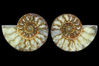 "Buy 3.95"" Sliced Ammonite Fossil (Pair) - Agatized - #123187"