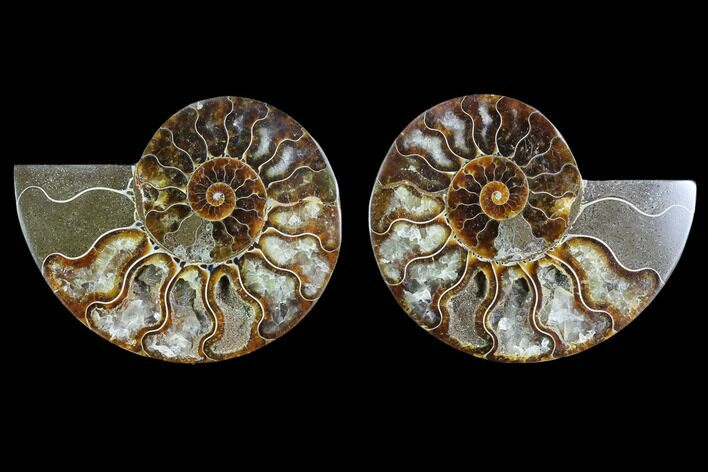 "3.5"" Sliced Ammonite Fossil (Pair) - Agatized"