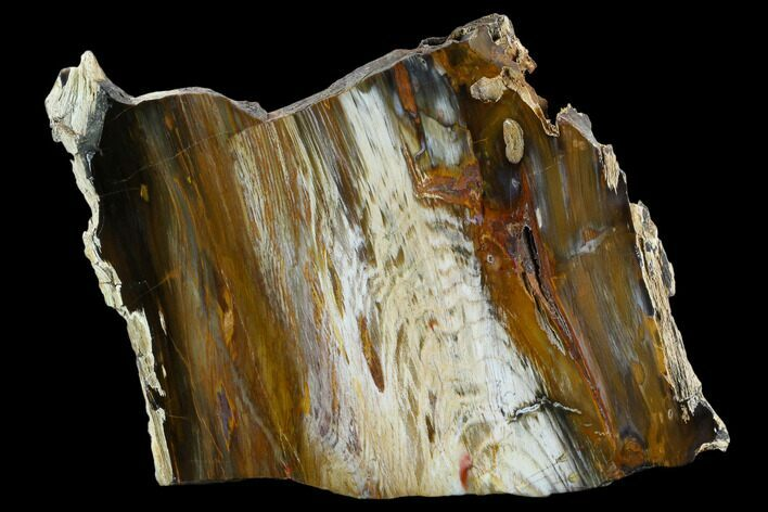 "13"" Colorful, Hubbard Basin Petrified Wood Slab"