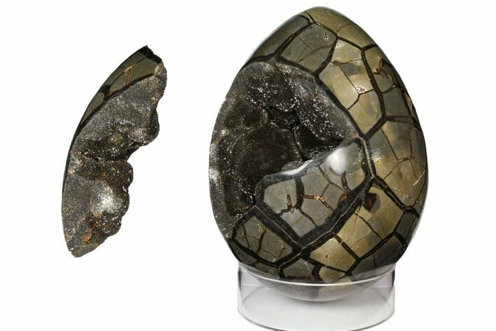 "Huge, 10.8"" Polished Septarian Puzzle Geode (30 lbs) - Black Crystals"