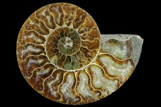 "3.45"" Agatized Ammonite Fossil (Half) - Madagascar For Sale, #125069"