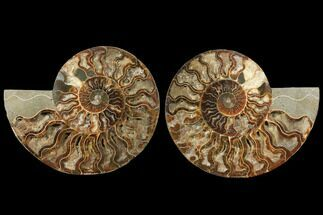 "Buy 8.4"" Agatized Ammonite Fossil (Pair) - Deep Crystal Pockets - #127249"