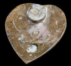 Buy Heart Shaped Fossil Goniatite Dish - #8857