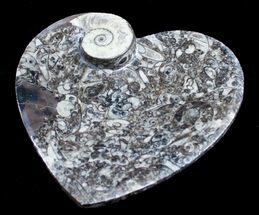 Heart Shaped Fossil Goniatite Dish For Sale, #8876