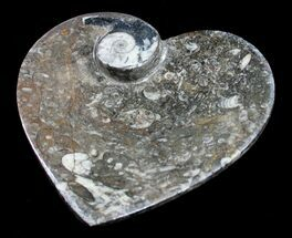 Heart Shaped Fossil Goniatite Dish For Sale, #8882