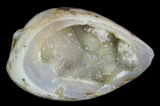 "1.42"" Chalcedony Replaced Gastropod With Druzy Quartz - India For Sale, #128249"