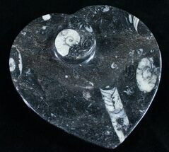 "Buy 6.5"" Heart Shaped Fossil Goniatite Dish - #9001"