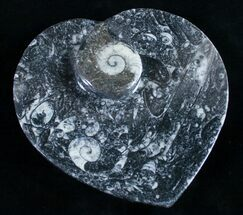 "Buy 6.5"" Heart Shaped Fossil Goniatite Dish - #9007"