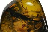 Spiny Fossil Cockroach (Blattodea) Leg In Amber - Myanmar - #128916-1